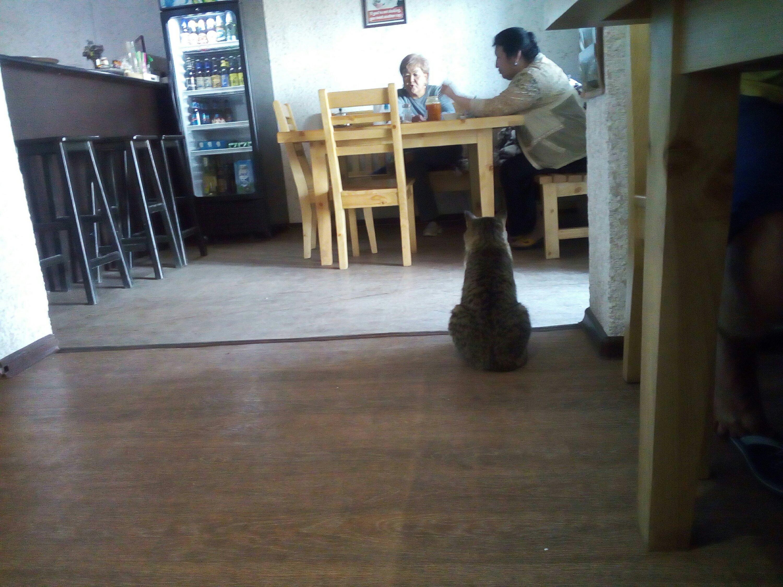 Tlustá kočička díra